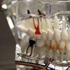 endodontics: removing the diseased pulp from a tooth